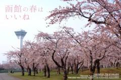 函館の春はいいね